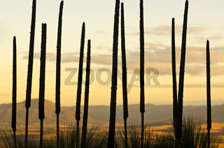 Grass Tree Background