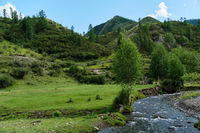 A small mountain river in a green valley