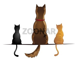 Hund mit zwei Katzen