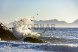 Seagull flying at dawn over the sea and waves