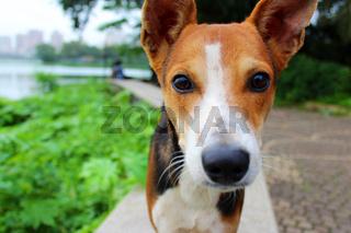 Dog looking at camera close-up portrait, Mumbai, India
