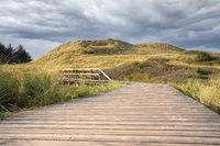 Footpath through the dunes of Amrum, Germany