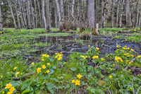 Natur Bachlauf im Harz Selketal