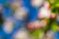 Abstract blur spring blossom background