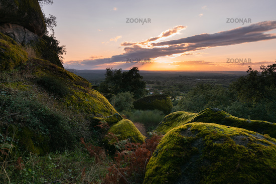 Boulders covered with moss on a green forest tree nature landscape at sunset