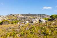 Rugged mountain landscape with fynbos flora in Cape Town