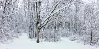 Winter Wonderland Northern Illinois