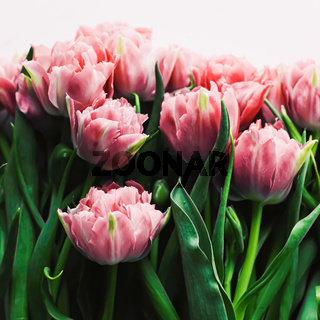 Spring flowers on marble background as holiday gift, greeting card and floral flatlay