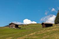 Pferde auf der Seiser Alm, Alpe di Siusi, Suedtirol