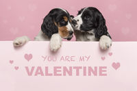 Valentine's day greeting card with two cuddling Cocker Spaniel puppies hanging over the border of a pastel pink board with text you ar my Valentine