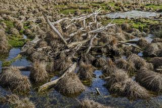 Baumreste im Sumpf
