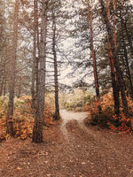 Landscape photo in sepia style of gloomy autumn day in misty frowning forest with bare trees
