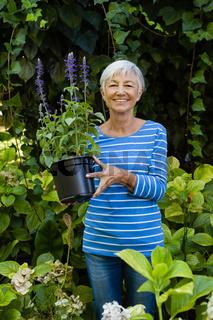 Portrait of smiling senior woman holding purple flower pot amidst plants