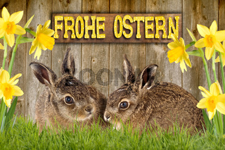 two young hare sitting between daffodils