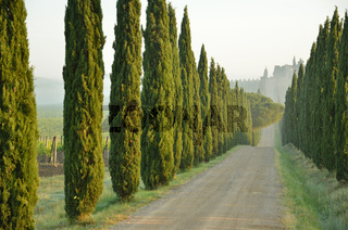 A tipycal wooded path in Tuscany