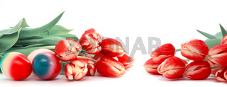 Easter eggs with red tulips isolated on white background.