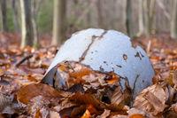 im Wald liegender Müll
