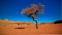 Desert Landscape with Acacia in Moul Naga valley at in Tassili nAjjer national park in Algeria