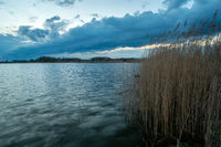 Reeds by the shore of the lake and a dark cloud on the sky