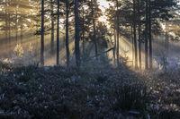 Nach einer kalten Nacht kaempfen sich die ersten Strahlen der Morgensonne durch den Nebel