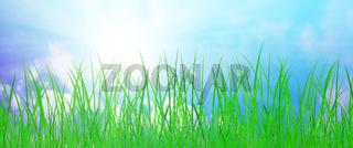 gras wiese natur sonne himmel banner