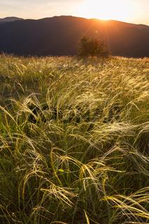 Meadow