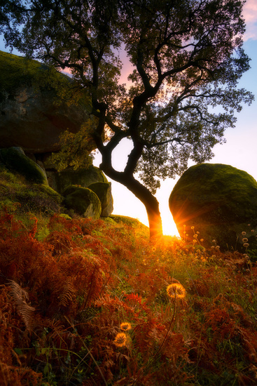 Amazing tree nature green and red landscape with flowers and sun flare on a boulder at sunset