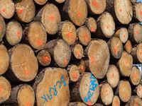 Gekennzeichnete Schnittflächen gestapelter Baumstämme