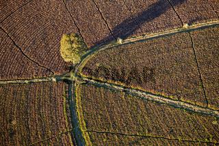 Teeplantagen an der Wild Coast, Suedafrika