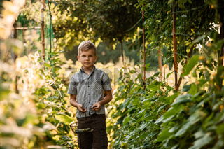 The little boy stands with a basket in the garden bed