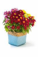 colorful chrysanthemum in flower basket