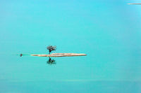 Tiny islet and tree on it