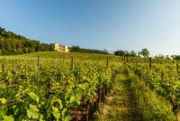 Blick über Weinberge zur Villa Ludwigshöhe bei Edenkoben, Pfalz, Rheinland-Pfalz, Deutschland