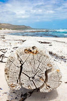 Large driftwood log on sandy beach of Cape Towns stormy coastline