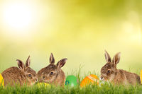 three little easter bunnies with easter eggs on a green meadow isolated on a green background with sunlight