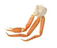 Snow crab  cluster  on a white  background.
