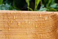 Treated wood, protected against moisture and water. Water drops after rain.