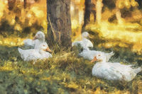 Flock of white ducks on a farm. Painting effect.