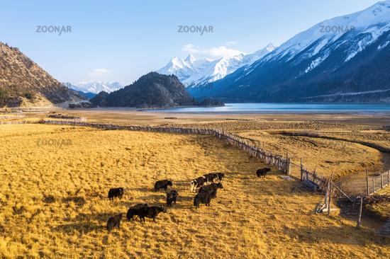 rural scenery by Ranwu lake in Tibet