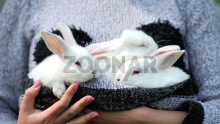 Baby white rabbits in hand