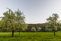 Blühende Apfelbäume auf Streuobstwiese, Heidelberg, Baden-Württemberg, Deutschland