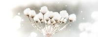 Schneeflockenfänger