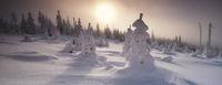 Wandernde Eisbäume
