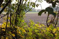 Feld hinter Zweigen