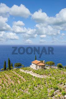 Küstenlandschaft mit Weinbau,Insel Elba,Toskana,MIttelmeer,Italien