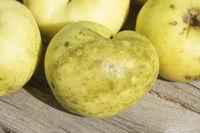 20211001_Malus domestica Weisser Wintertaffetapfel, Apfel, apple, Gloeodes pomigena, Rußfleckenkrankheit, sooty blotch.jpg