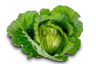 Freshly harvested cabbage on white background .