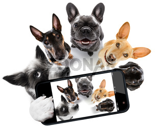 group of dogs taking selfie with smartphone
