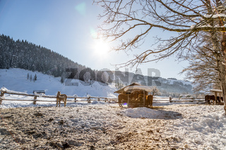 Brown horse in paddock: Idyllic scenery in winter