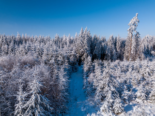 Aerial top down view of beautiful winter forest treetops.
